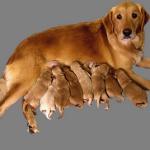 Роды Животных